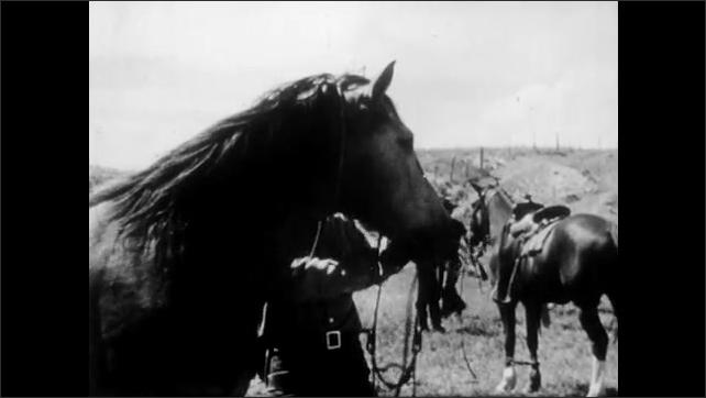 1940s: UNITED STATES: man catches pony with rope. Man saddles up pony. Horse shakes head.