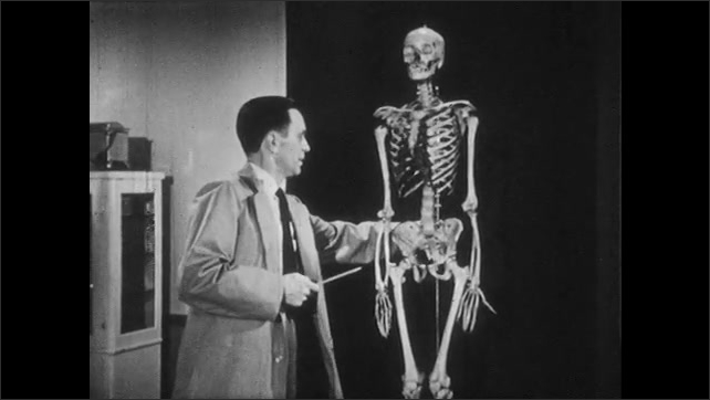 1950s: Man standing next to model of human skeleton speaks. Man rotates skeleton to back. Man traces spine from base of the skull to lower back.