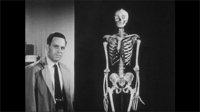 1950s: Man stocks glass bottles. Man with model skeleton. Man gestures from shoulder to hands of skeleton. Man gestures to pelvis of skeleton, down to legs and feet.
