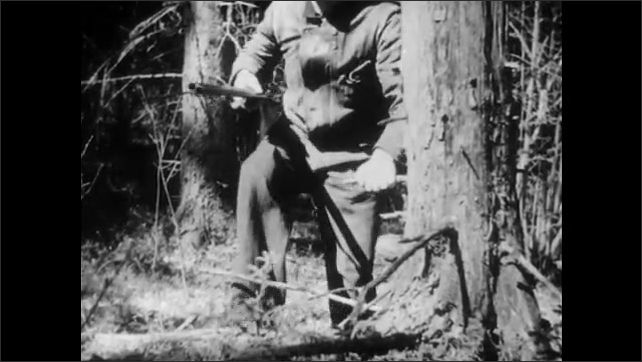 1950s: UNITED STATES: hunter walks through woods. Man holds rifle in hands. Man listens to sounds in woodland. Close up of man