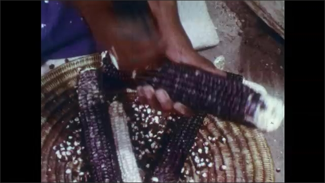 1960s: Woman breaks corn in pueblo, woman mashes corn in tub. Hands break corn kernels off cob into basket. Woman concentrates.