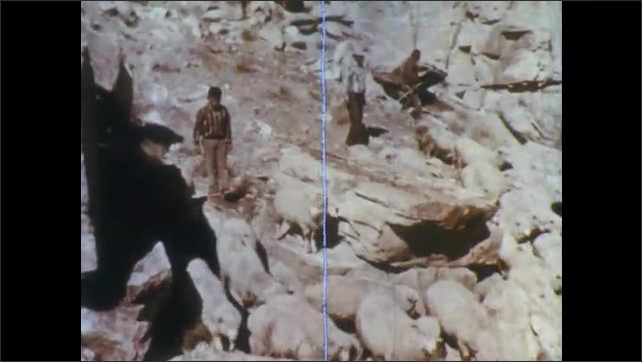 1960s: Man and boy walk behind herd of sheep on rocky cliff, shepherd watches from boulder. Sheep nibble on grasses. Boy and men walk behind flock down cliff. Sheep walk along ground.