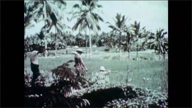 1950s: Woman sits at loom, weaves. Men walk into rice fields.