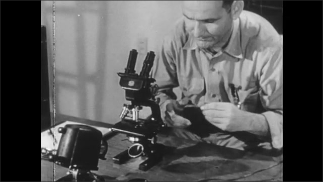 1940s: UNITED STATES: man looks at alpha activity of sample in lab. Man prepares sample slide under microscope. Man looks down microscope