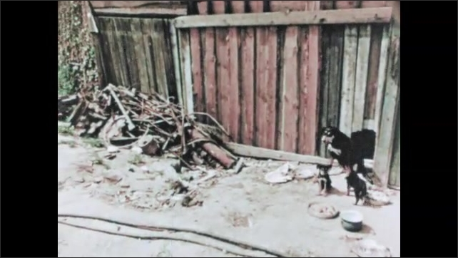 RUSSIA 1960s: dog and puppies in street. Russian city slum