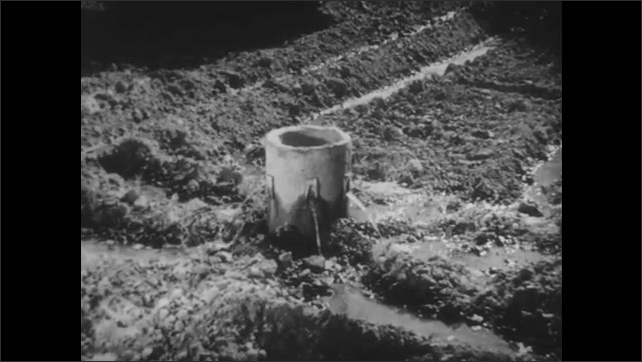 1930s: Wheat grass moves in wind. Farmer shovels soil around ditches, orange trees left and right. Water flows from supply head to feeder ditches. Farmer shovels soil in ditches next to orange trees.