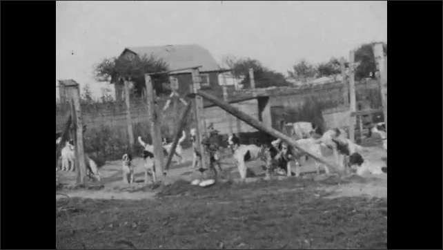1920s: child runs in snow, waves, 3 children play with toys near smiling laughing woman, many dogs in fenced area play, run, wag tails