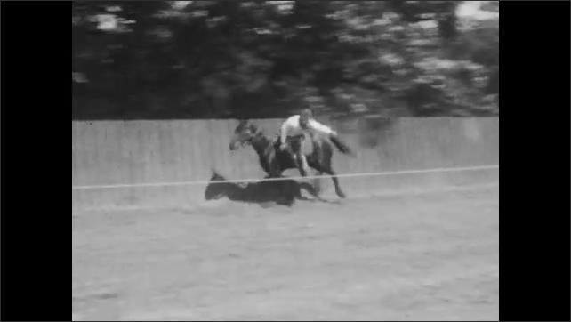 1920s: Man rides horse hanging from front of it. Man falls of horse onto ground. Man rides horse hanging from side of it. Two men ride horse hanging from sides of it. Man flips around on saddle.