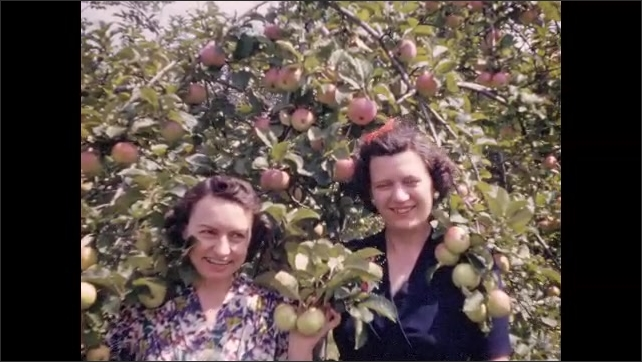 1940s: Large group of vacationers explore orchard; two women pose with fruit-laden branches; long rows of  flowers at roadside.