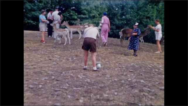 1940s: Tourists feed, pet deer and fawns in petting zoo.
