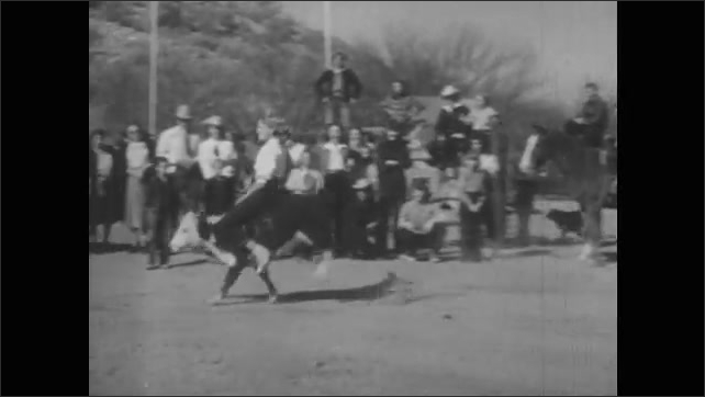 1940s: Girl rides and falls from calf at rodeo. Audience cheers at fence. Girl successfully rides calf across rodeo arena. Girl shakes hands with cowboy and walks across arena.