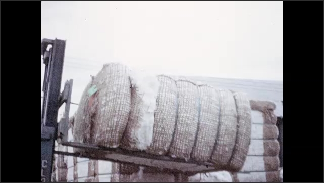 1960s: Forklift moves cotton bale onto trailer, where worker shoves it into place.