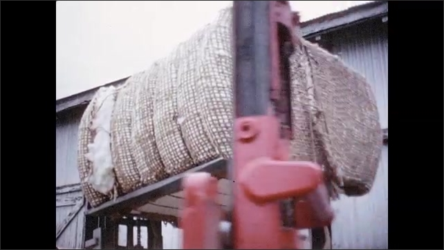 1960s: Forklift carries cotton bale.