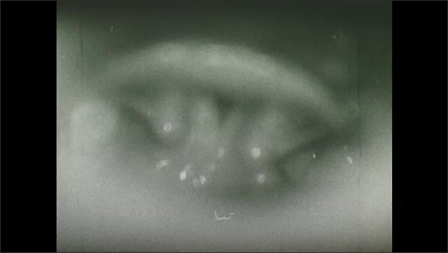 1960s: Larynx closes and epiglottis opens and closes.