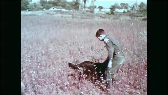 1960s: Milkweed seed head sways as seeds fly through air. Boy and dog play in field of dry weeds.