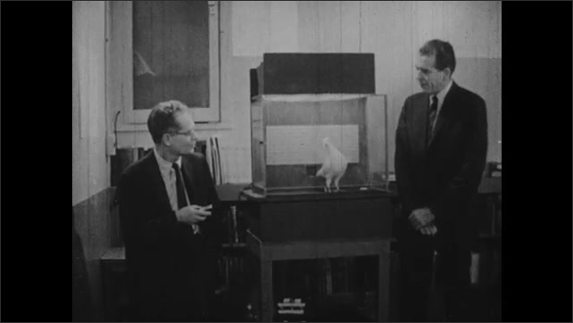 1950s: B. F. Skinner and man talking by pigeon in cage.