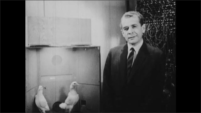 1950s: Man talking in lab, man talks into camera. Man next to pigeons in cage, talks into camera. Close up of man talking.
