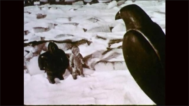 1950s: Two statues of people stand in snow, looking at raven. Raven perched on ice top. Raven. Raven looks down on statues people. Statue looking. Raven. Raven flies from perch into sky.