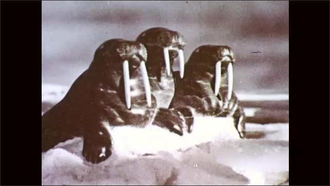 1950s: Two statues of people stand in snow, one holds fist up. Statue of raven flies in sky. Shadow of raven across snowy ground. Three statues of walruses watch. Walrus lies on side. Walrus face.