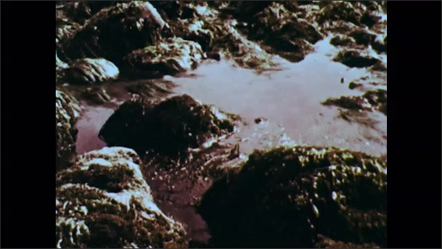 1960s: Waves crash over rocks along shore. Algae covered rocks on shore.