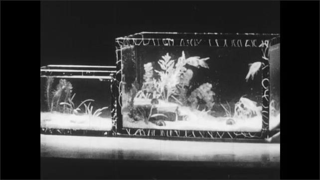 1950s: UNITED STATES: boy looks at teacher. Boy smiles. Gold fish in tank. Fish swim in aquarium.