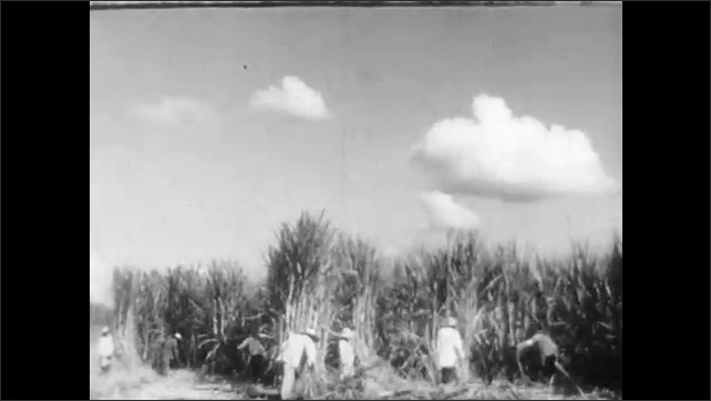 1940s: Man sits in chair, smokes pipe, talks to man and woman sitting on couch. Field with crops. Slaves pick cotton in field, harvest sugar cane. Steamboat travels on river.