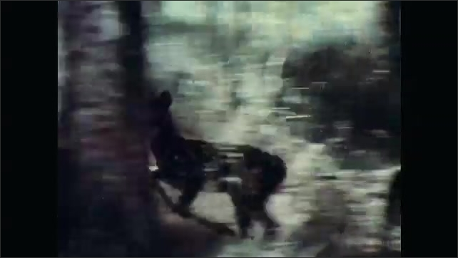 1960s: UNITED STATES: deer walks through forest. Fawn runs through forest. Patterned coat on fawn.