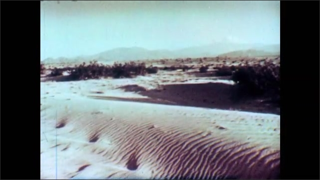 1950s: Water stream flows surrounded by vegetation. Desert dunes with mountain range in background. Cactus with sky in background. Bird flies in the sky. A bee collects pollen from a flower.