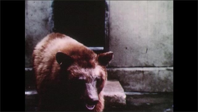 1950s: Smokey the bear sign at the National Zoo. Bear in enclosure at zoo. Children look at bear.