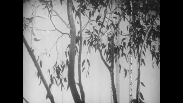 1940s: Baby koala clings to thin branch. Mother koala scales eucalyptus tree. Baby koala clings to branch.