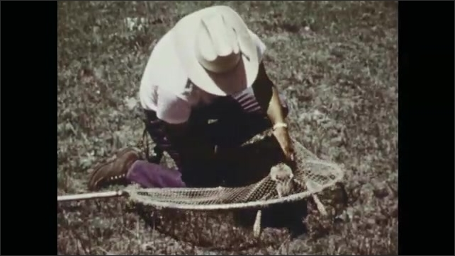 1970s: Pronghorn fawn lies on ground, man sneaks up to fawn, places net over fawn, picks up fawn.