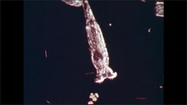 1970s: Microscopic organisms move. Plant.