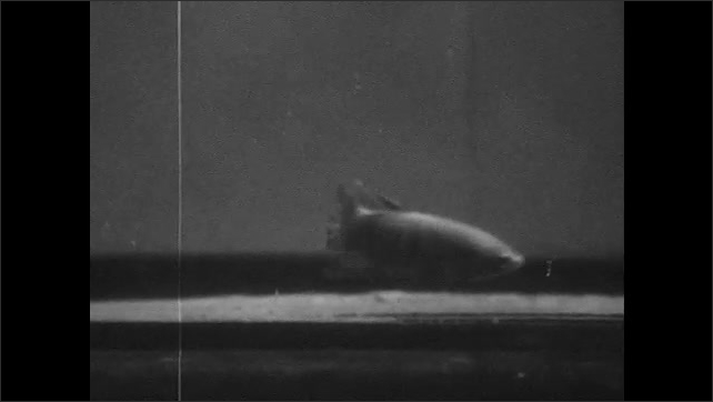 1960s: Two fish swim in aquarium. The smaller fish swims to the top and back down again. The bigger fish then chases the smaller fish around the tank.