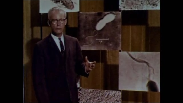 1960s: UNITED STATES: ring of fibres inside organism. Man talks to camera. Photographs of organisms on wall.