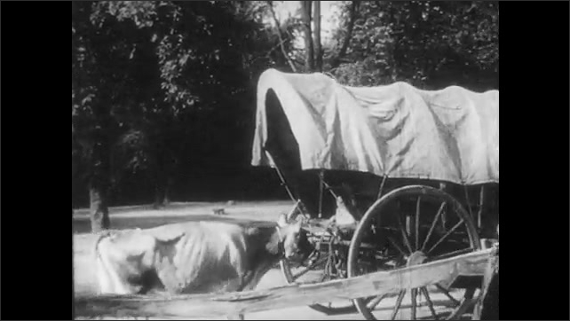 1950s: Man leads two oxen as they pull a covered wagon past women standing outside log cabin. Cow follows, tied to back of wagon. Man and two children walk out to field towards cow.