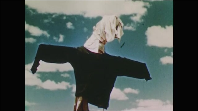 1950s: man with cloth tied as headband looks down, bones and rocks on desert ground, scarecrow against cloudy sky, hand removes circular barrier from around young plant, hands pack dirt around plant
