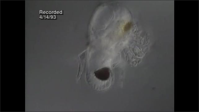 1990s: View of samples under microscope show variety of plankton.