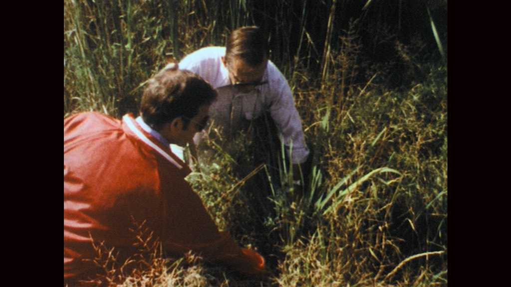 1970s: Men kneel and examine grass in wetlands. Men talk and walk through field. Sunlight streams through tall trees.