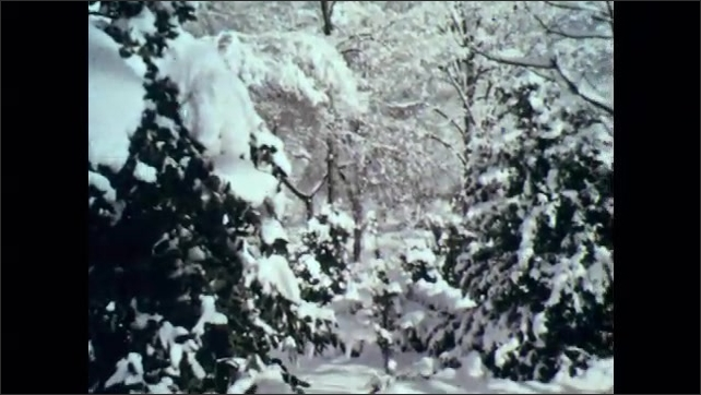 1960s: Flower blooms. Snow covered trees. Pink blossoms.