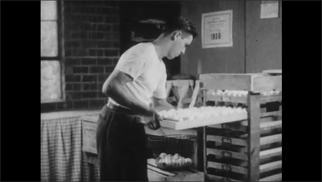 1950s: Man examines and places chicken eggs in tray. Man slides tray into carrier. Man places trays of eggs into large incubator.