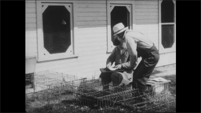 1950s: Farmer and inspector examine chickens near coop. Men sit on cage and talk. Inspector signs certificate and hands it to farmer.