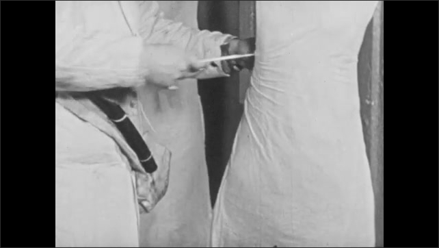 1950s: Carcasses hang from hooks, man covers carcass with cloth, ties around legs. Inspector rotates and examines hanging pork carcasses.