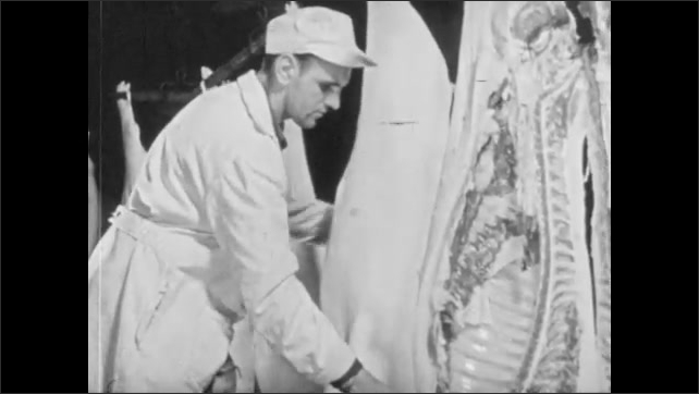 1950s: Inspector rotates and examines hanging pork carcasses, stamps with seal. Butchered carcasses pass along conveyor belt, male factory workers hold knives.