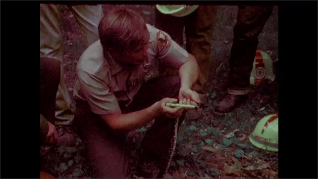 1970s: Ranger holds a snake and group of young people gather around to observe. Youth Corps Conservation member holds skunk and talks about it to group.