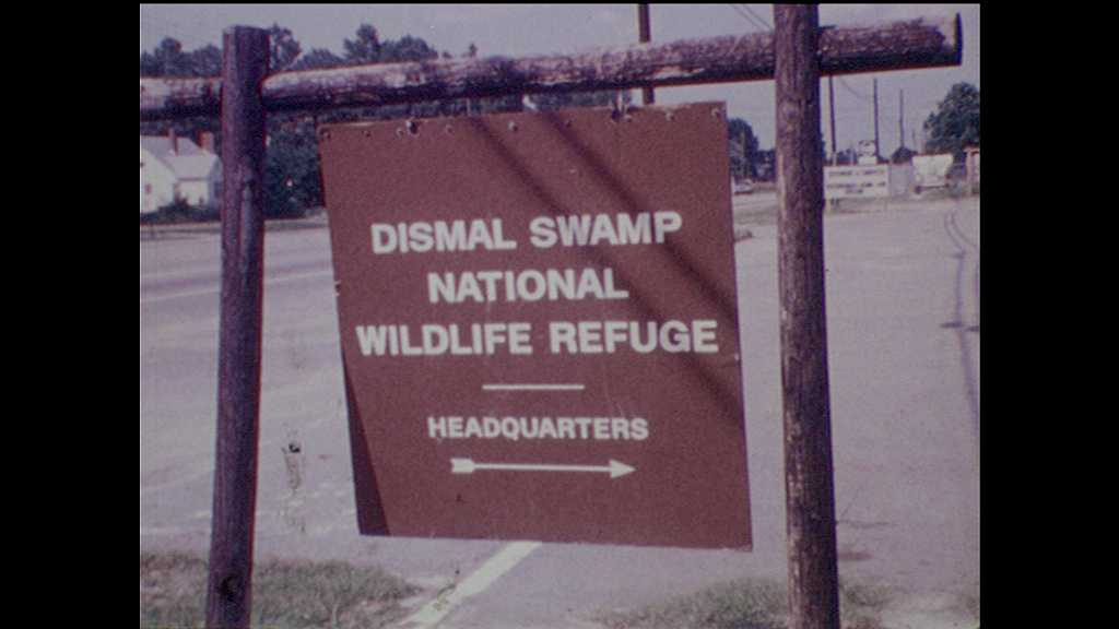 1970s: sign for Dismal Swamp National Wildlife Refuge headquarters. teenage boys pull on rope and adjust log. wood walking bridge in forest. flag flies near stick fence with workers and wheelbarrows.