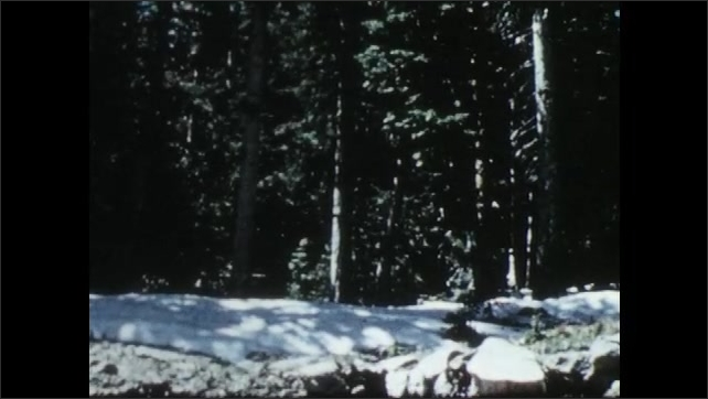 1950s: Snowy mountain. Snowy forest floor. Snow melts. Snow covered tree branches.