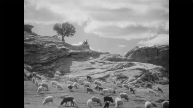 1930s: Sheep and goat roam in their rocky pasture. Boy sits on rock with his puppy at sunset.