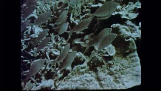 1960s: Sun seen through underwater. Fish swim along coral reef. Waves crash on the shore.