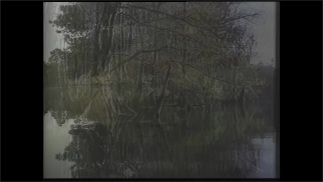 1990s: Tracking shots, moving through swamp.
