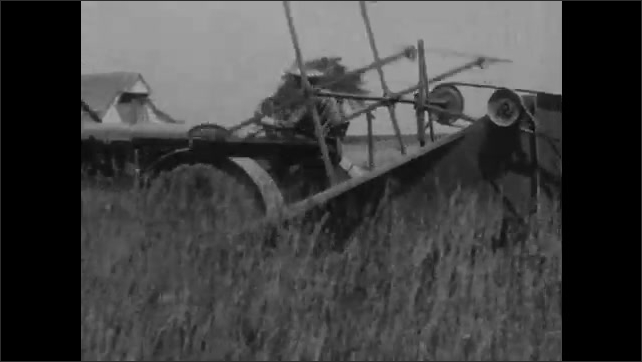 1930s: Farmer drives tractor and combine harvester over field of Timothy hay grass. Hands hold sack under chute of combine. Grass seed falls from chute into bag.